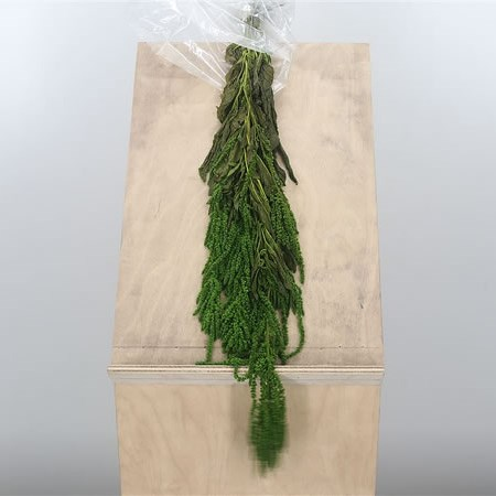 Amaranthus Green Preserved