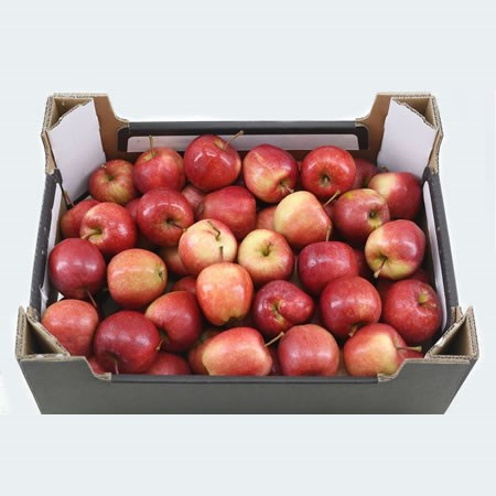 Apple Malus Red - in Crate