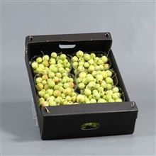 Apple Malus green small