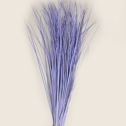 BEARGRASS DYED LILAC