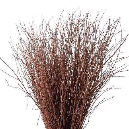 BETULA DYED BROWN