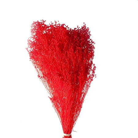 BROOMS PRESERVED RED