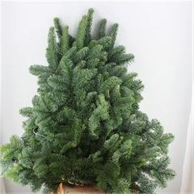 Weekly special - Blue Spruce 5Kg