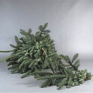 Blue Spruce (Small Bunches)