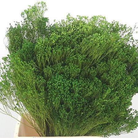Broom Bloom Green (Dried)