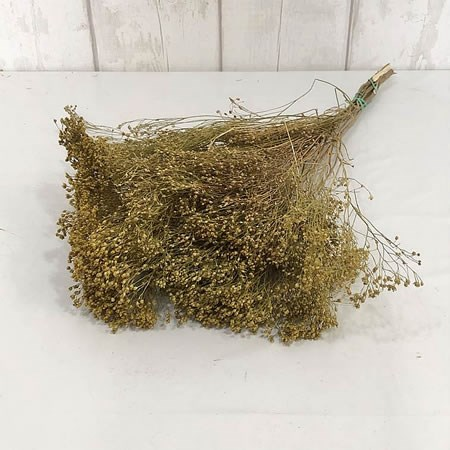 Broom Natural (Dried)