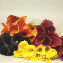 CALLA LILY AUTUMN MIX