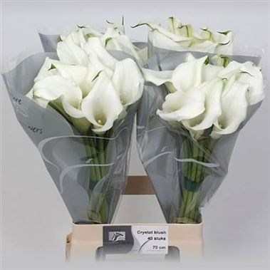 CALLA LILY CRYSTAL WHITE