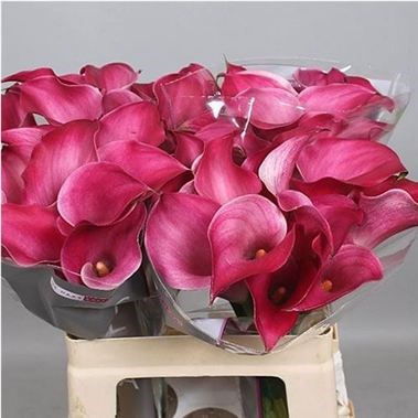 CALLA PINK LILY JEWEL