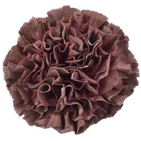 CARNATION COPPER EXTASIS