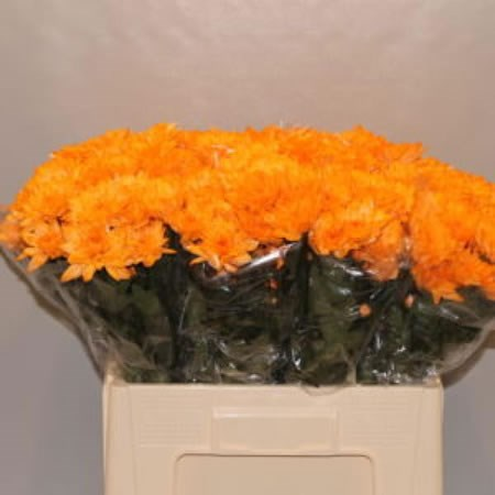 CHRYSANT SPR. BALTICA DYED ORANGE