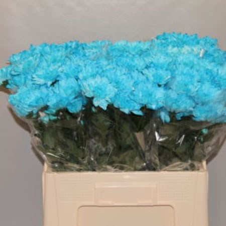 CHRYSANT SPR. BALTICA LIGHT BLUE