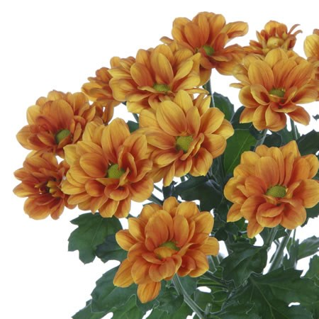 CHRYSANT SGL. MANAGUA ORANGE