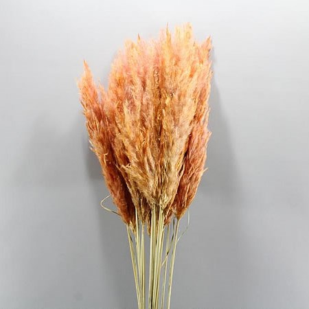 CORTADERIA DYED CORAL (PAMPAS GRASS DRIED)