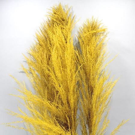 CORTADERIA DYED YELLOW (PAMPAS GRASS)