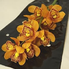 CYMBIDIUM ORCHID MINI ORANGE