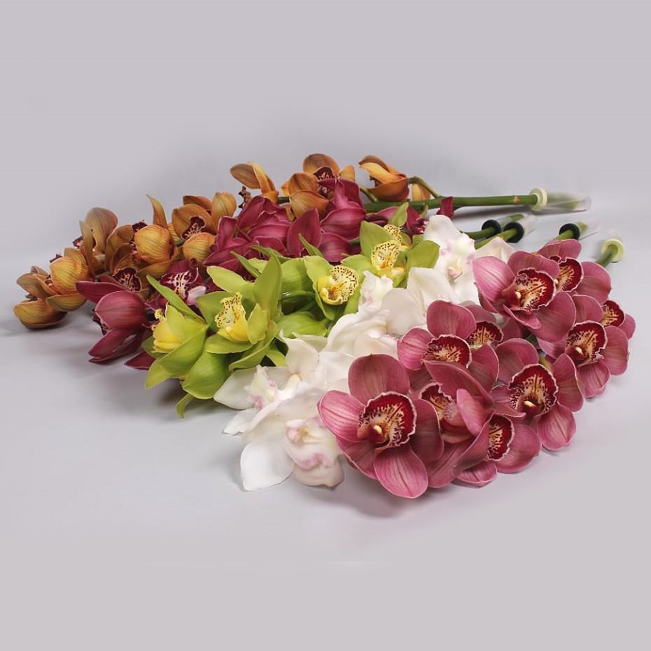 CYMBIDIUM ORCHID MIX (COLS MAY VARY)