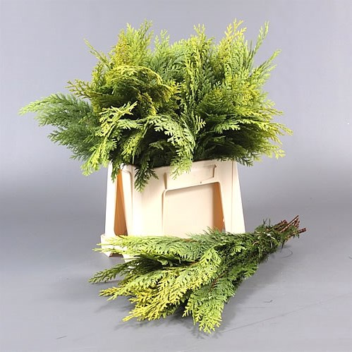 Conifer Green - 5Kg Bag