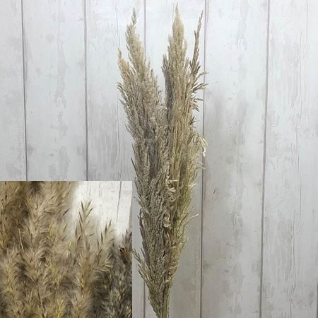 Cortaderia Stone/Natural Blend (Pampas Grass Dried)