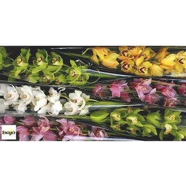 CYMBIDIUM ORCHID MIX (BUYERS CHOICE)