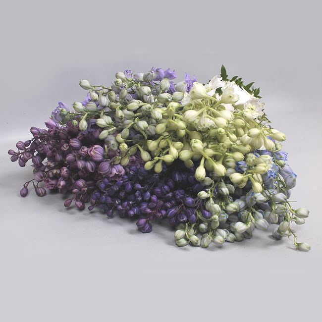 DELPHINIUM ELATUM MIX (COLS MAY VARY TO IMAGE)