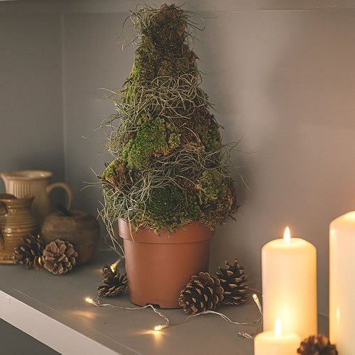 DIY Fresh Moss Miniature Xmas Tree Kit