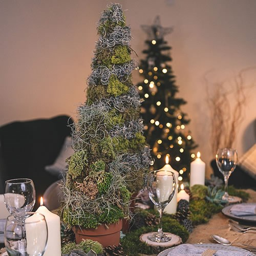 DIY Preserved Moss Xmas Tree