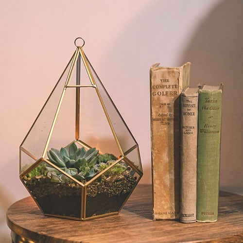 DIY Terrariums Gold 27cm Kit (Makes 2)