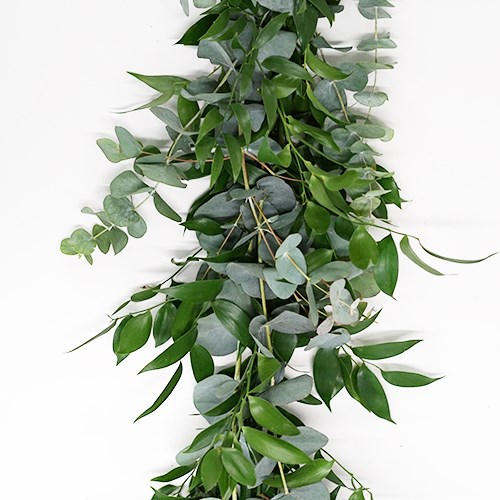Double Soft Ruscus & Eucalyptus Cinerea Garlands
