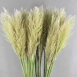 Pampas Grass (Dried)
