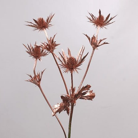ERYNGIUM DYED COPPER