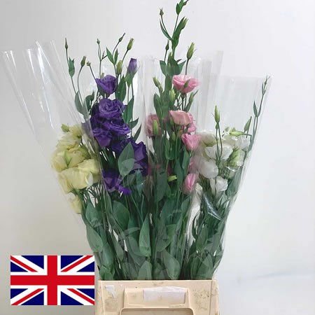 Eustoma Lisianthus Mix (English)