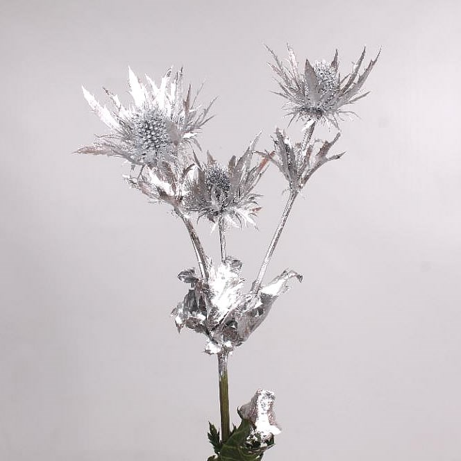 Eryngium Orion Dyed Silver