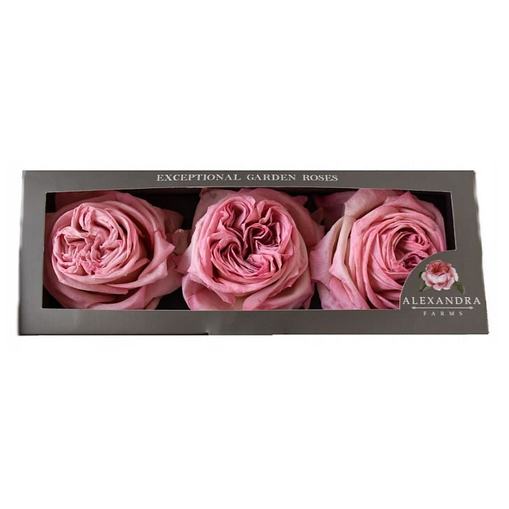Freeze Dried Pink O'Hara Roses