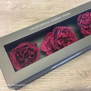 Freeze Dried Princess Kishi Roses
