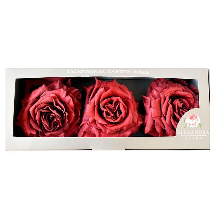 Freeze Dried Wanted Roses