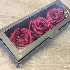 Freeze Dried Yves Piaget Roses