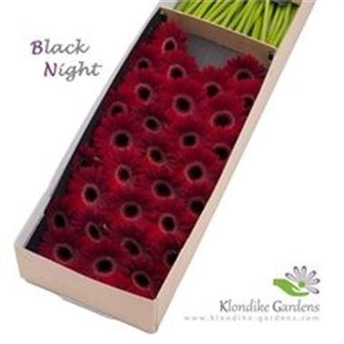 Germini Black Night (Secure Boxed)