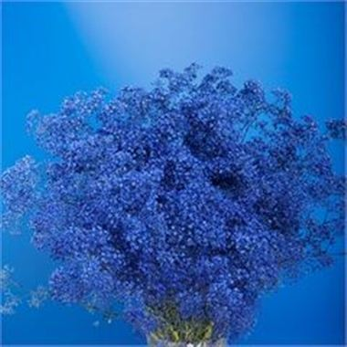 Gypsophila Dyed Blue