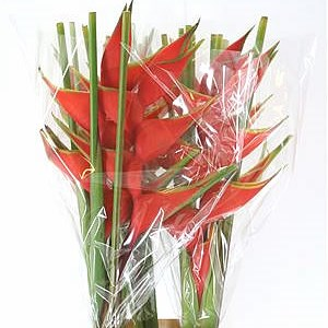 HELICONIA BIHAI LOBSTER