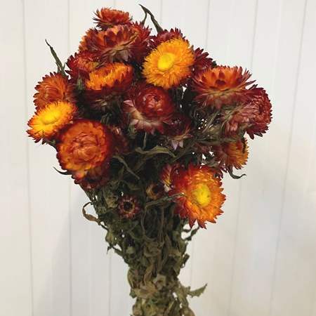 Helichrysum Red (dried)
