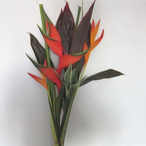 Heliconia Focus Bouquet