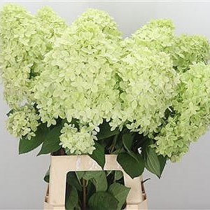 Hydrangea Magical Candle