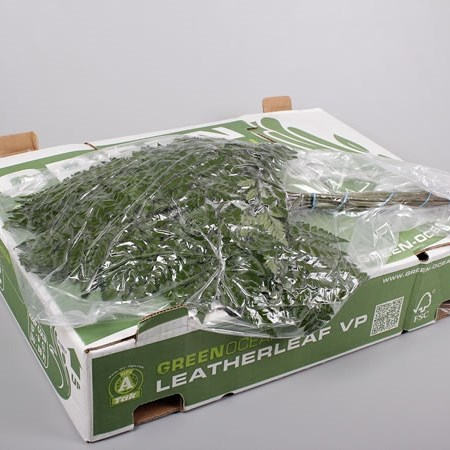 LEATHERLEAF EXTRA VAC PACKED