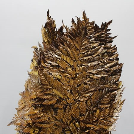 LEATHERLEAF PRESERVED BROWN