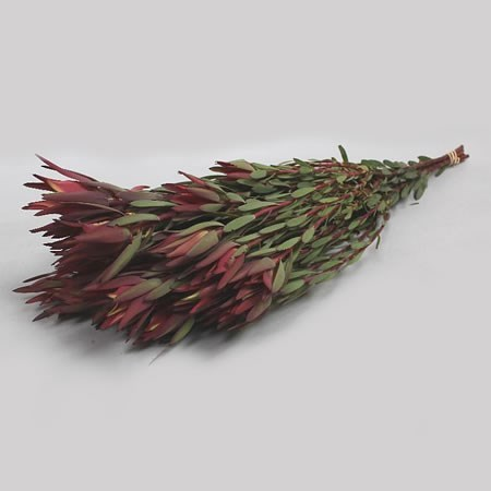 LEUCADENDRON BLUSH (SPRAY)