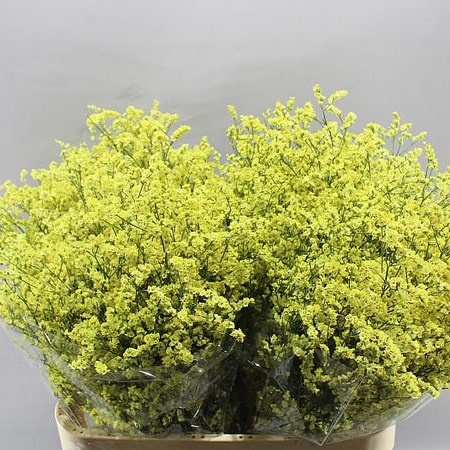 LIMONIUM YELLOW DIAMOND