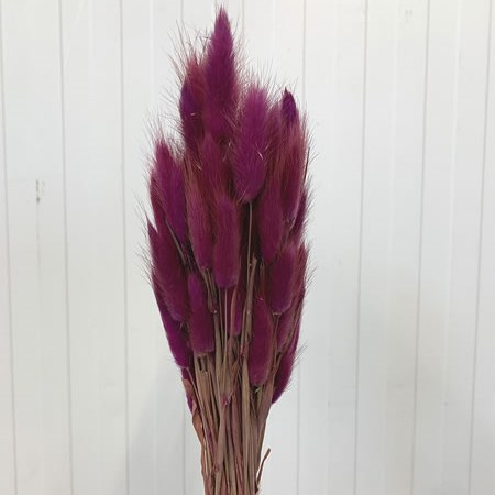 Lagurus Purple (100gm Bunch)