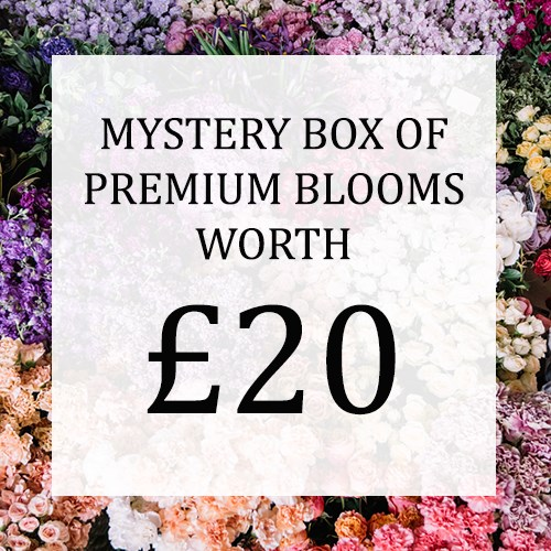 Mystery Flower Box £20 (incl. VAT)