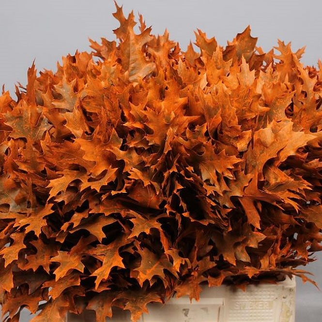 OAK LEAVES DYED ORANGE (SMALL)